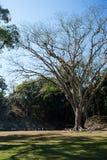 Copan Ruins Royalty Free Stock Image