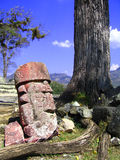 Copan stone head Royalty Free Stock Photo