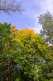 Copas coloridas del otoño Foto de archivo libre de regalías