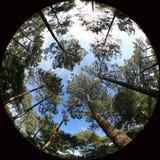 Copas de árbol Fotos de archivo libres de regalías
