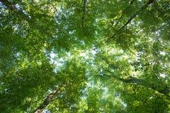 Copas de árbol verdes coloridas Foto de archivo libre de regalías