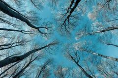 Copas de árbol y troncos Fotos de archivo libres de regalías