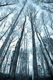 Copas de árbol y troncos Imagen de archivo