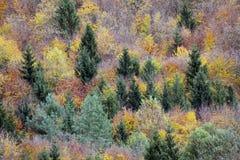 Copas de árvore em uma floresta no outono Imagens de Stock