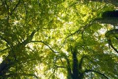 Copas de los árboles Fotografía de archivo