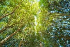 Copas de árbol Fotografía de archivo libre de regalías
