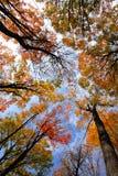 Copas de árvore Imagem de Stock