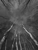 Copas en bosque en día oscuro del otoño contra el cielo nublado Fotografía de archivo