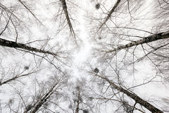 Copas, estación del invierno Imagenes de archivo