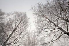 Copas, estación del invierno Foto de archivo