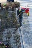 LANDSCAPER REPARAING FOR SUMMERS. Copenhagen/Denmark 18 April 2018_Landscaper prepring for summer rose flowers . . Photo.Francis Joseph Dean / Deanpictures Royalty Free Stock Image