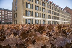 Copenhagen, Denmark - autumnal leaves. This image shows a housing building in Copenhagen, Denmark. It was taken on a sunny day in November 2017. It focuses on Royalty Free Stock Photography