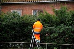 LANDSCAPER CUTTING BSHES. Copenhagen /Denmark - 17 January 2018_ . Landscaper cutting bushes . Photo.Francis Joseph Dean / Deanpictures Stock Photos