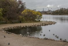 Copenhagen, Denmark - a park and some ducks. This image shows a park in Copenhagen, Denmark. It was taken on a cloudy day in November 2017 stock image