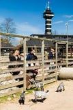Copenhagen Zoological Garden. COPENHAGEN, DENMARK - APRIL 18, 2015: The goat enclosure at the popular Danish tourist attraction The Copenhagen Zoological Garden royalty free stock photos