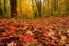Coperta di autunno dei fogli Immagine Stock
