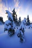 Coperta di neve fotografia stock