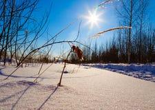 Coperto di erba del gelo su fondo del giorno di inverno del sole Fotografia Stock