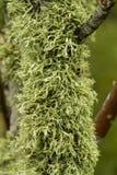 coperto in lichene fotografia stock libera da diritti