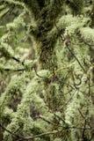 coperto in lichene fotografie stock