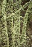 coperto in lichene fotografia stock