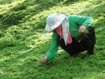 Copertura completa del giardiniere del lavoratore agghindarsi per eliminare l'erba dall'iarda del giardino fotografia stock libera da diritti