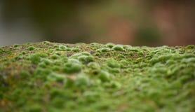 Copertura cresciuta muschio verde le pietre ruvide nella manifestazione più forrest Immagini Stock