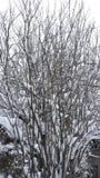 Copertura dell'albero con neve Fotografia Stock Libera da Diritti