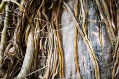 Copertura dell'albero dalle radici gialle dell'albero fotografia stock libera da diritti