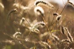 Copertura dell'erba di autunno dalla rugiada di mattina Fotografia Stock