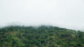 Copertura della nebbia su mountian Fotografia Stock