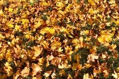 Copertura delle foglie nel parco di autunno Immagine Stock