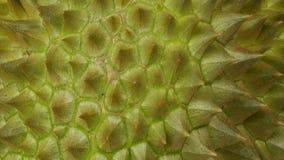 Copertura o pelle del Durian Fotografia Stock