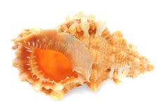 Copertura superiore del mare isolata su bianco Fotografie Stock