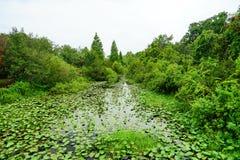 Copertura tropicale dello stagno da erba Immagine Stock