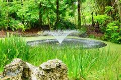 Copertura tropicale dello stagno da erba Fotografia Stock