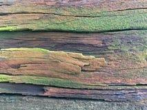 Copertura verde sulle vecchie plance di legno e stagionate Immagine Stock Libera da Diritti