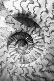 Coperture Immagine Stock