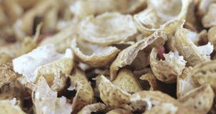 Coperture arrostite dell'arachide stock footage