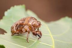 Coperture degli insetti Immagini Stock
