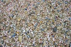 Coperture del cono e corallo morto Fotografie Stock