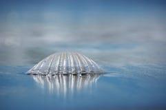 Coperture del mare Fotografie Stock Libere da Diritti
