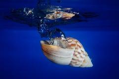 Coperture del mare che cadono nell'acqua Fotografie Stock