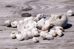 Coperture del mare su legno Fotografie Stock