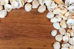 Coperture del mare sulla sabbia Priorità bassa della spiaggia di estate Vista superiore Conchiglie su una tavola di legno - un ri Fotografia Stock