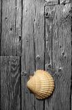 Coperture del mare sulla scheda di legno in bianco e nero. Fotografia Stock