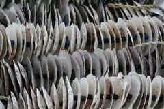 Coperture del mollusco Immagini Stock Libere da Diritti