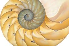 Coperture del Nautilus Immagini Stock