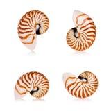 Coperture del Nautilus Fotografia Stock