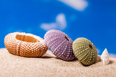 Coperture dell'istrice del mare sul fondo del cielo blu e della sabbia immagini stock libere da diritti
